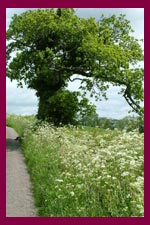 a Devon country lane